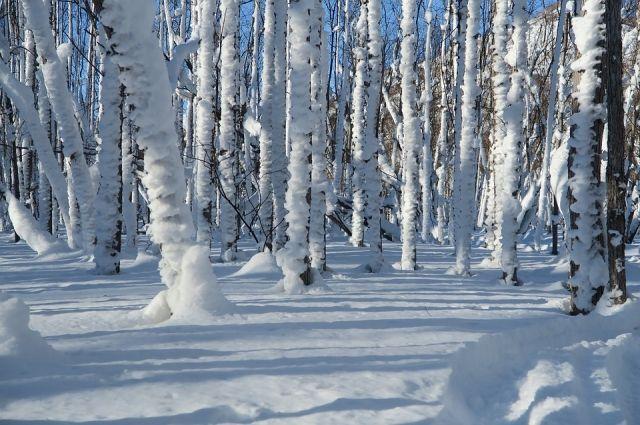 Наконец-то в Омске потеплеет и можно будет погулять в парке.