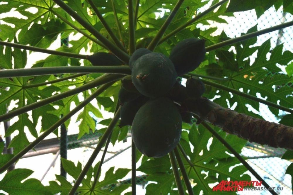 С прошлой осени туда уже начали перевозить некоторые растения, который необходима долгая адаптация.