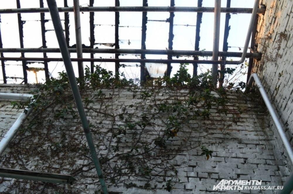 Температурные условия и влажность в саду не выдерживается, с тепличных окошек постоянно капает растаявший снег.
