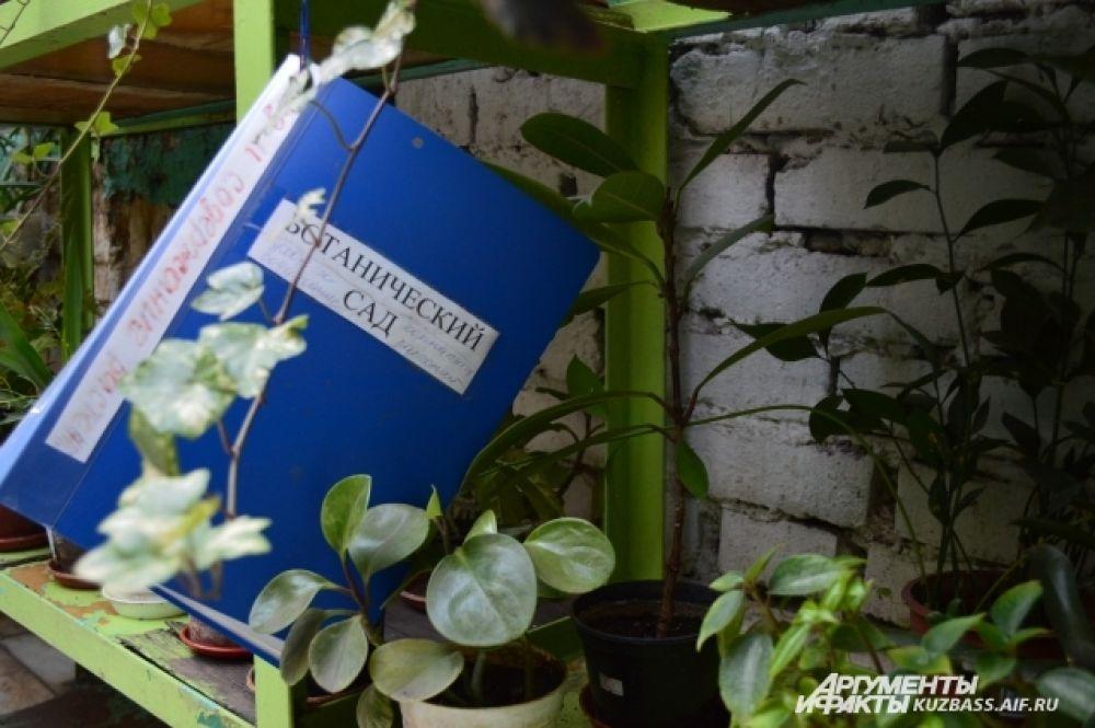 Сотрудники надеются, что к 100-летию Кемерова, которое состоится в июне, все растения уже переедут в новое помещение на Лесной Поляне.