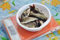 Рыбу будут кормить своим кормом