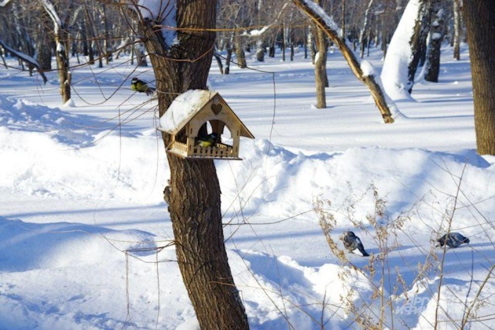 От мороза в Новосибирске стали погибать свиристели. А вот синицы выглядят вполне бодрыми, особенно, если в кормушках им оставили угощение.