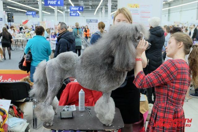 В выставке участвуют собаководы из 40 городов России и зарубежных стран.