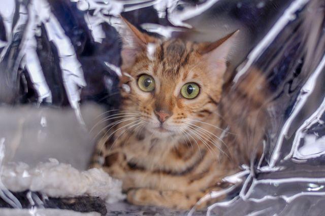 Покупатели требуют от пермяков компенсации кошку и моральный вред.