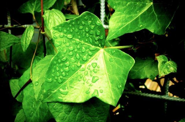 Нужно ли стимулировать семена перед посадкой?