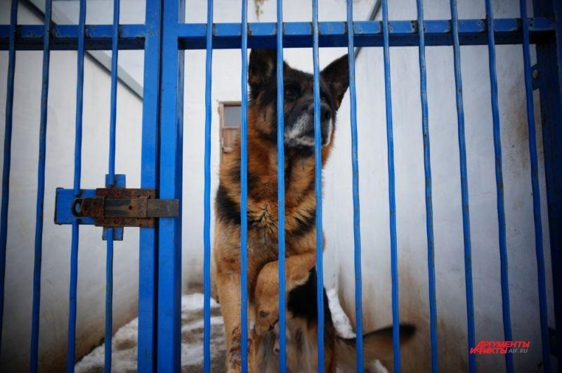 У каждой собаки персональный вольер и тёплая будка.