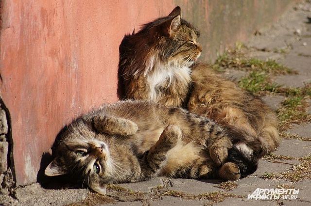 Удивительно, но животное готово броситься на помощь постороннему для него человеку.