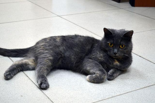 ВЕкатеринбурге будут судить живодера, выбросившего кота с13-го этажа