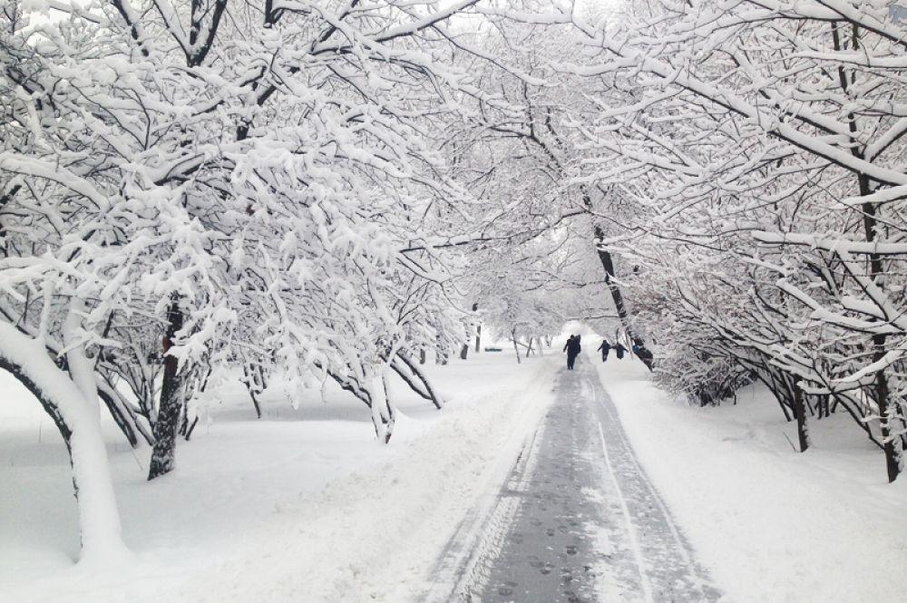 Заснеженные деревья во время снегопада в Москве.
