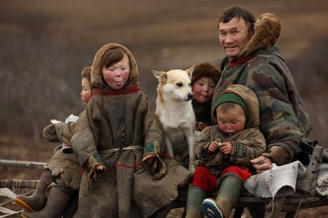 Оленеводы имеют право на жильё после десяток лет работы в тундре.