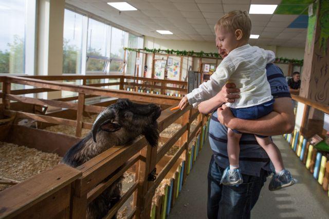 Одни козлика кормят, другим - дай животное за рога схватить.