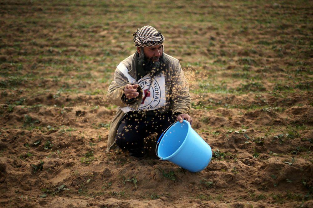 Палестинский фермер сажает пшеницу недалеко от границы с Израилем в южной части сектора Газа.