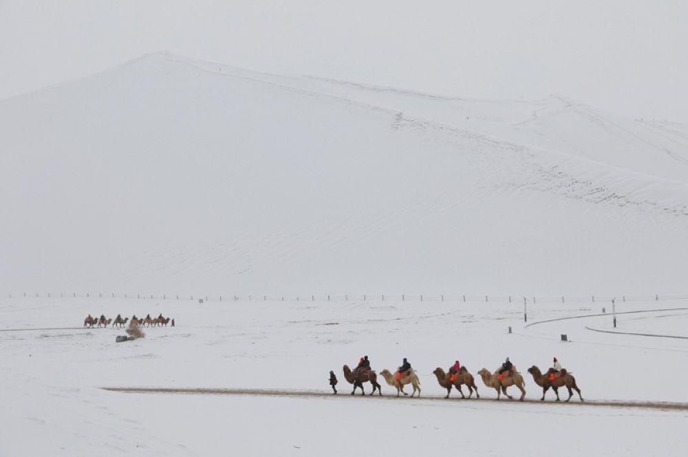 Туристы катаются на верблюдах в заснеженной пустыне Мингша-Шан в Дуньхуане, Китай.