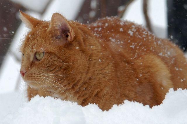 Выходные в кемеровской области обещают быть морозными.