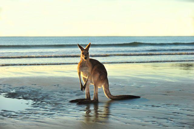 Краснодарские туристы снимут фильм вАвстралии