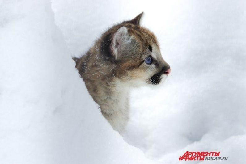 Котенку очень нравится снег и свежий морозный воздух.