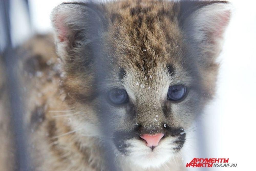 Пока малыш живет с мамой. Примерно к 6-9 месяцам его отправят в один из зоопарков России и подыщут пару.