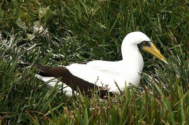 Самая одинокая птица в мире умерла в Новой Зеландии - Real estate