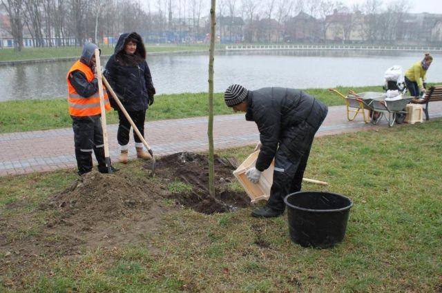 В парке «Южном» пообещали высадить 426 деревьев.