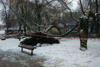 Мужчины получили небольшие травмы после падения дерева.