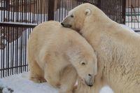 У медведей снова конфетно-букетный период.