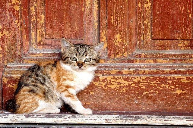 Котенок погиб от рук хозяйки.