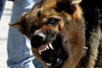 По началу собака вела себя агрессивно.