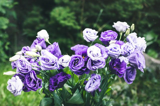 150 где купить рассаду цветов в омске цветы оптом