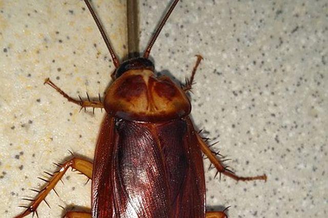 «Сил уже нет»: тюменцев с Лесобазы атакуют тараканы