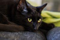 В тюменском автобусе без хозяина катался черный кот