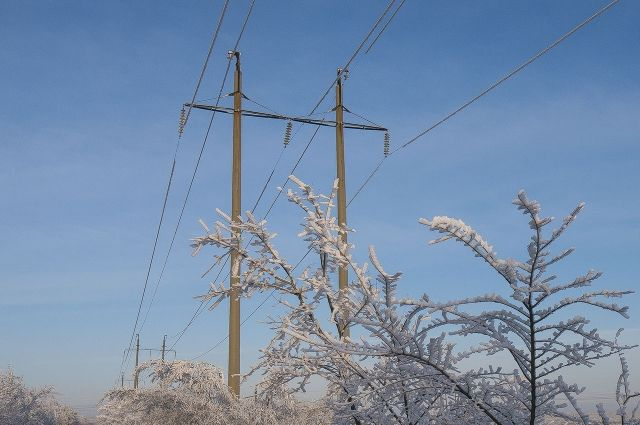 Под Воронежем спиленное дерево повредило линии электропередачи