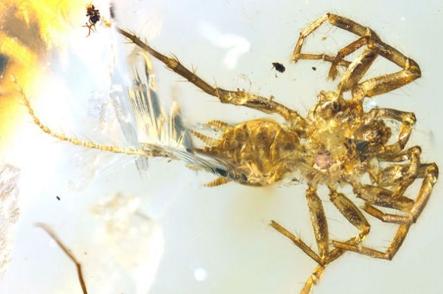 В Мьянме ученые нашли доисторического паука-химеру