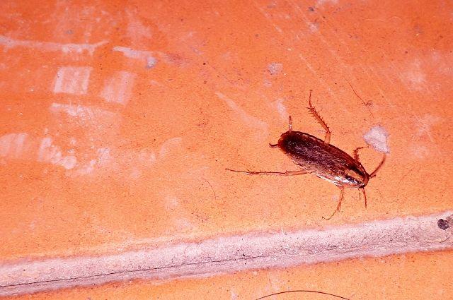 Тюменский ученый - о причине «нашествия» тараканов
