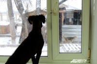 В Оренбурге приют для бездомных животных закрыт для приема кошек и собак.