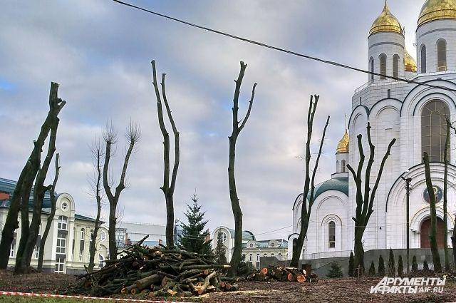 Обрезку деревьев у храма в Калининграде провели с нарушением.