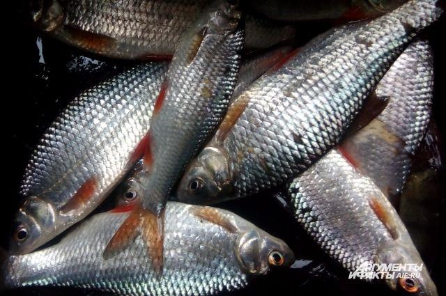 Производство рыбы в Нижегородской области увеличат более чем в два раза.