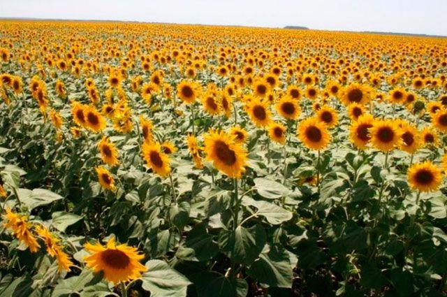 В Одесской области фермер присвоил себе 220 га государственной земли