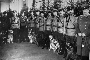 Полицейские демонстрируют собак на выставке в Санкт-Петербурге. 1914 год.