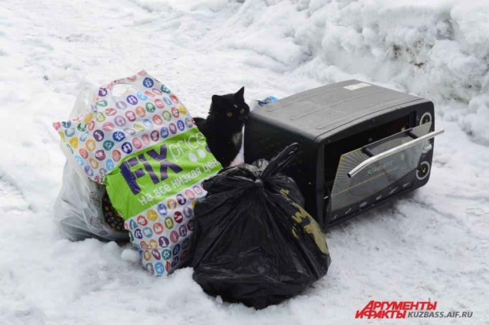 Всё это богатство порой становится самой интересной игрушкой для местной безымянной кошки, которую Юрий принёс из дома - чтобы на работе не было тоскливо.
