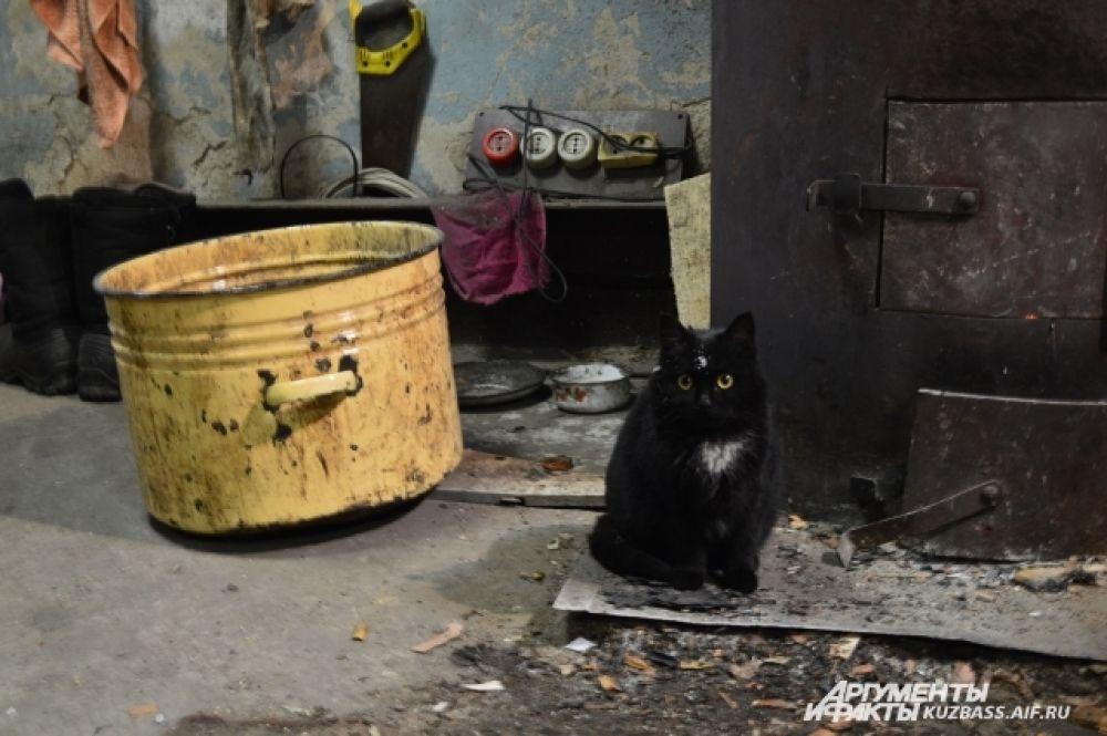 Для неё тут стоит отдельная мисочка с молоком. Кошка трётся рядом со старой буржуйкой и вызывает восторг у окружающих.
