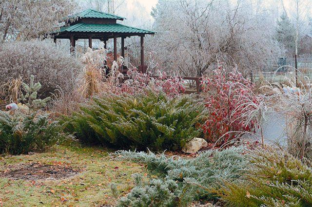 Зиме вопреки. Почему на сад приятно посмотреть в любое время года