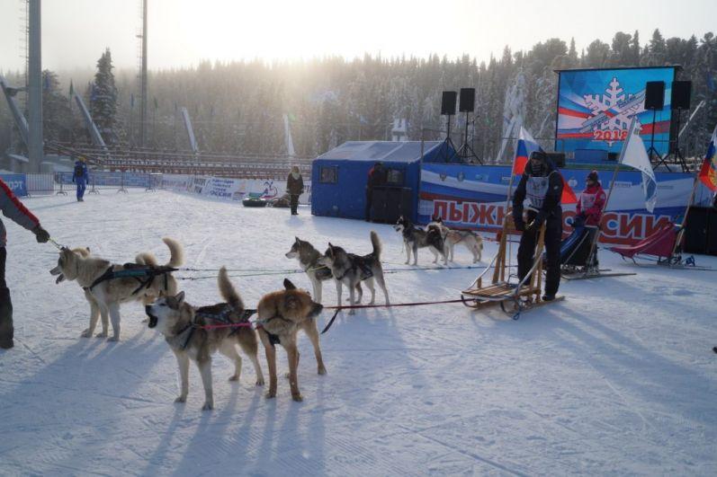 Для собачьих упряжек был организован отдельный развлекательный забег.
