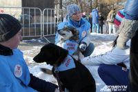 Собаки разных пород обнимались с пермяками. Некоторые - искали хозяев.