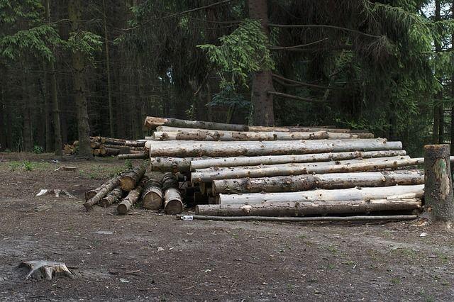 Несчастный случай произошел во время заготовки леса.