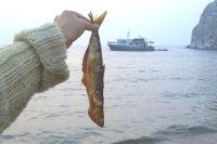 Байкальским рыбакам предлагают переключиться на окуня. Говорят он популярен даже в Европе.
