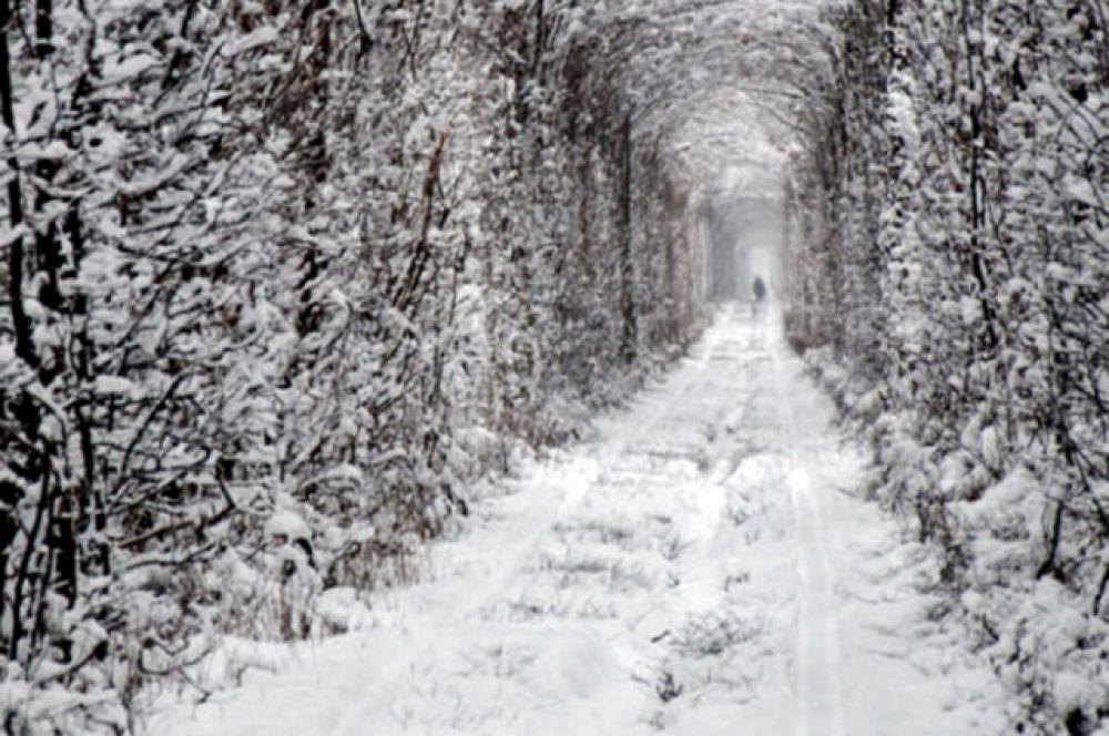 А это место называется Туннель любви и находится он в Ровенской области, в окрестностях поселка Клевань. Место, к слову, сначала возникло случайно - рельсы проложили сквозь густые заросли, которые затем и заросли кругом вокруг дороги. Сейчас служащие железной дороги следят за внешним видом туннеля, ведь он красив и весной, и летом, и осенью. Сюда ездят фотографироваться не только влюбленные, но и молодожены.