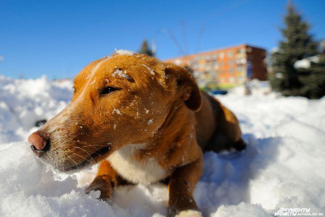 Главная цель проекта – найти для брошенных или выросших на улицах собак постоянный дом.