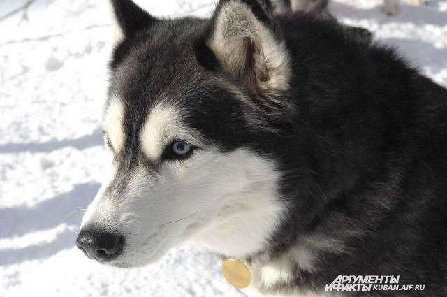 Владельцы собак должны выплатить соседям 12300 рублей.