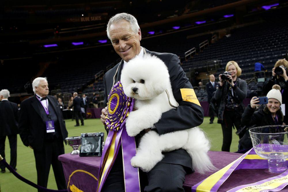 Победитель самой престижной американской выставки собак Westminster Kennel Club — бишон-фризе по кличке Флинн со своим хозяином.