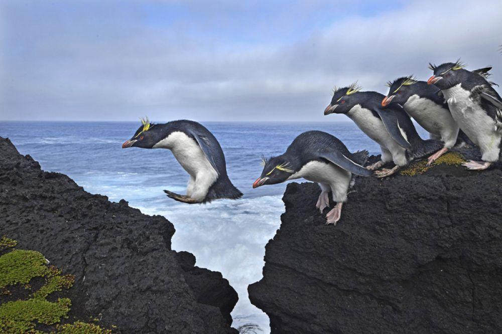 Четыре крупных океанских течения сходятся вдоль архипелага Галапагосских островов, создавая условия для необычайного разнообразия животной жизни.